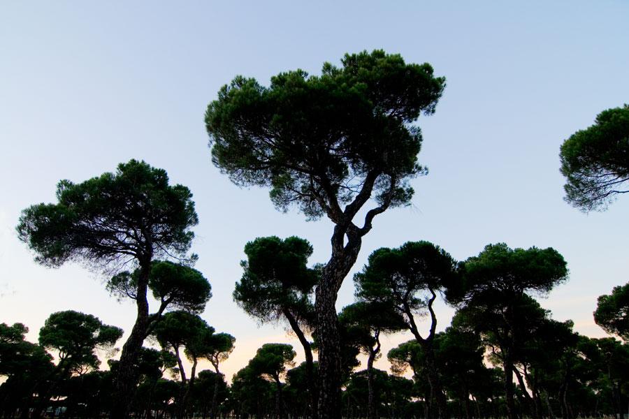 No hay imagen disponible de The Antequera Pine Forest